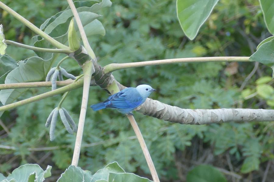 trinidad birding