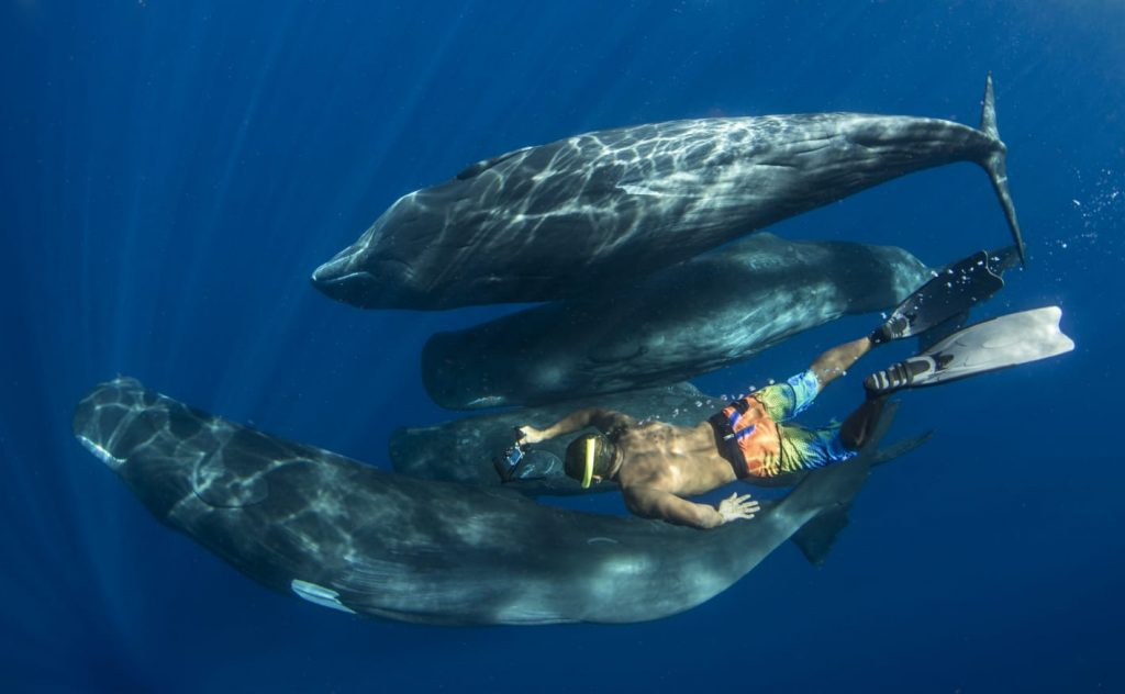 Whale watching Dominica
