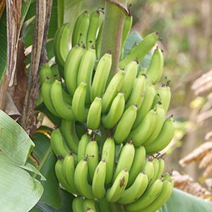11-Acre Organic Fruit Estate